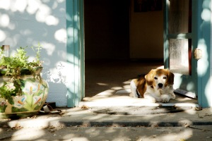daisy in doorway
