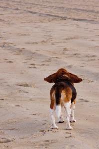 Lolli on the Beach