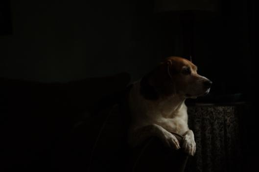 Daisy, August 4  (2012)